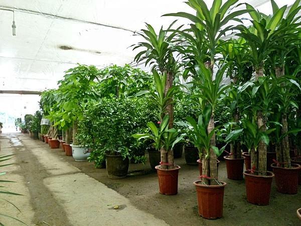 中国七大地区苗木市场行情如何?