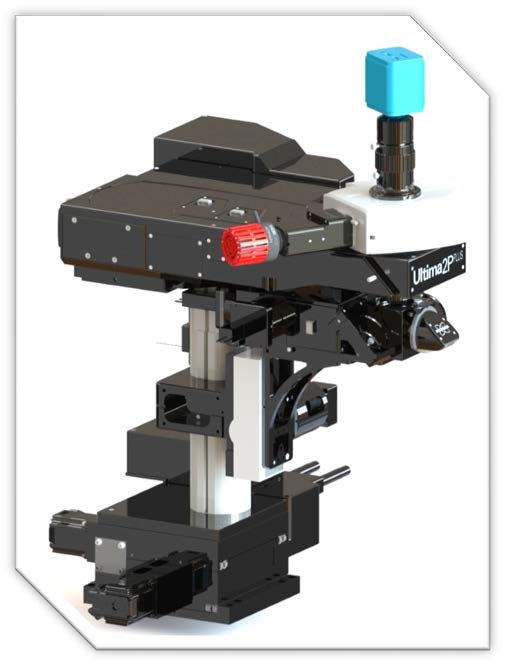 Ultima 2P PLUS多光子显微镜