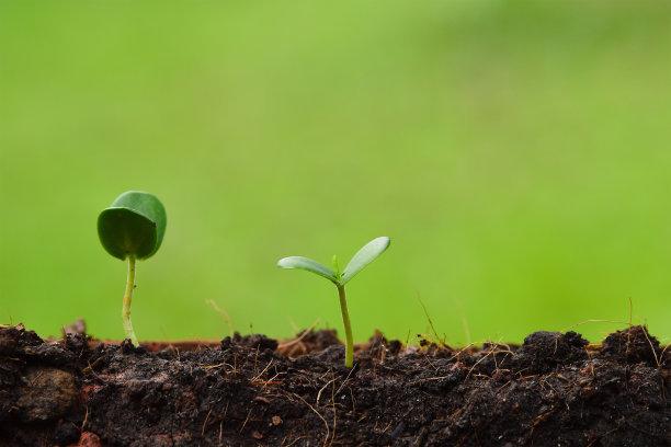 绿化苗木人会受退耕还林的影响嘛?