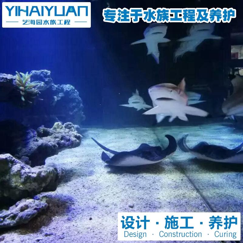 鲨鱼缸 (5).jpg