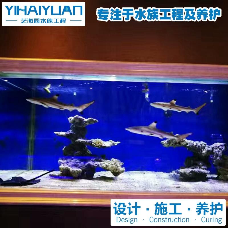 鲨鱼缸 (3).jpg