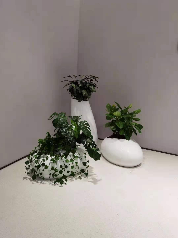 竹芋艺术组合