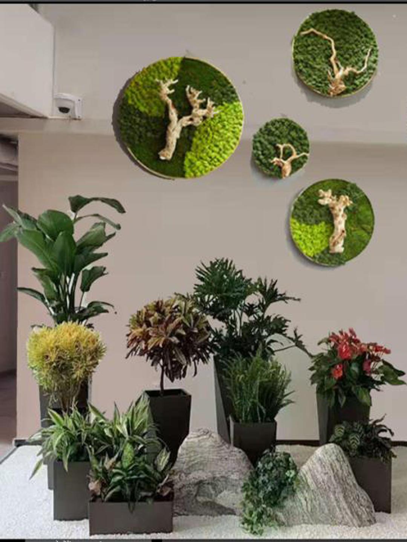 景观绿植组合