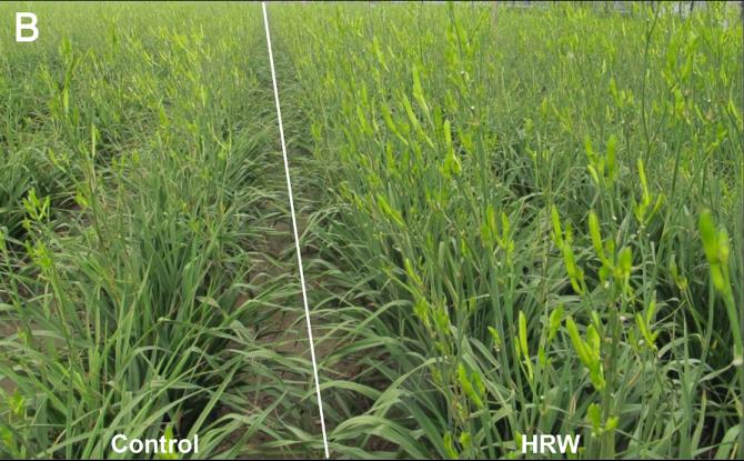 氢农学新研究成果发布!纳诺巴伯提供技术支持!