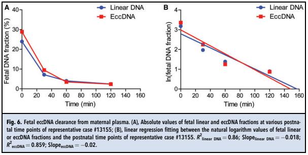 4. 胎儿eccDNA在母体循环中的清除