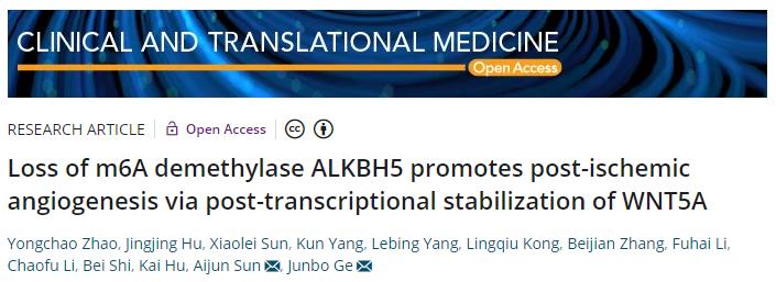 Loss of m6A demethylase ALKBH5 promotes post-ischemic angiogenesis via post-transcriptional stabilization of WNT5A