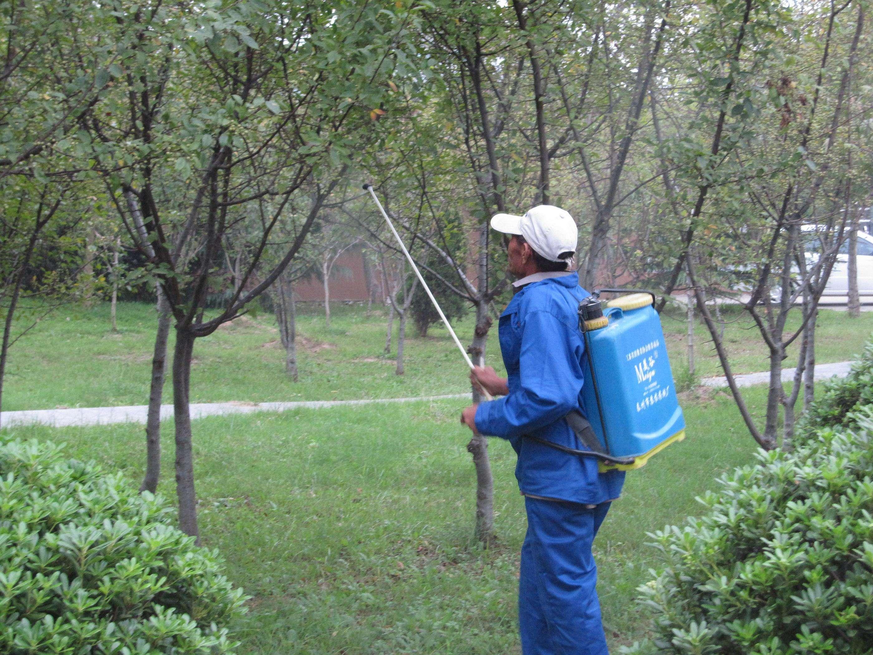 怎么提高园林绿化养护管理水平的主要措施?