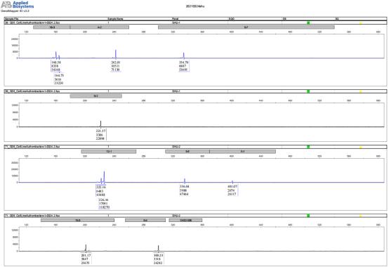 小鼠细胞STR鉴定