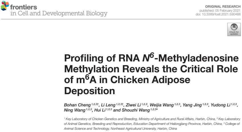 文章2.鸡脂肪组织中m6A修饰谱