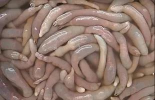海肠-烟台海长生物科技有限公司