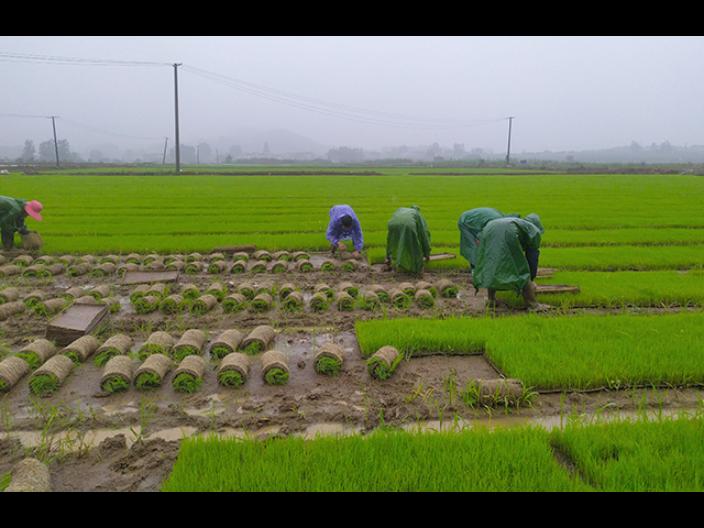 江苏水洗米供应商