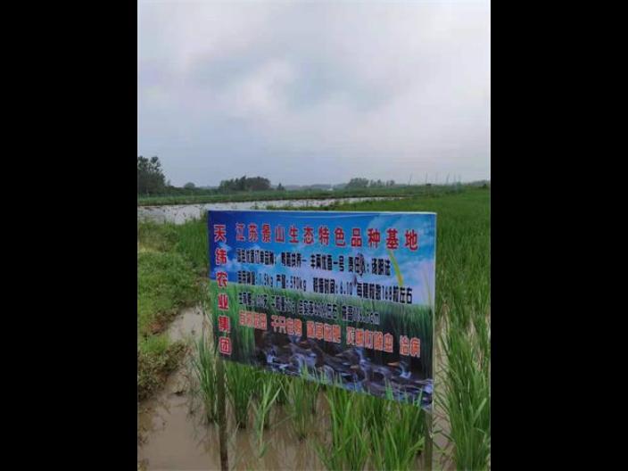 宁波真空包装米销售,米
