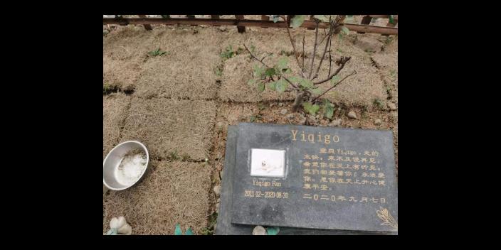 浙江寵淘寵物火化行業 上海寵淘寵物供應